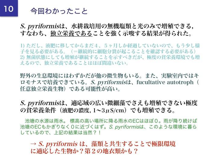 Stentor pyriformisの研究