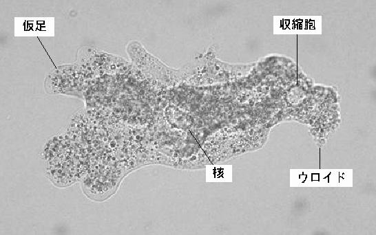 ノロウィルスを殺菌消毒できる除菌スプレー | なる …